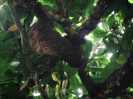 Hotel La Diosa: Sloths in the trees by the ocean