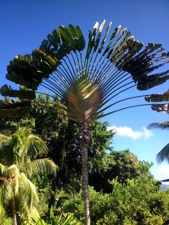 Diquis Del Sur : la végétation
