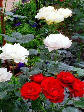 Shenyang Botanical Garden: Розарий