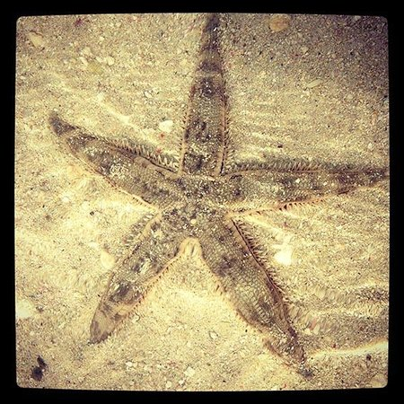 Cocomo Resort : Starfish in the lagoon