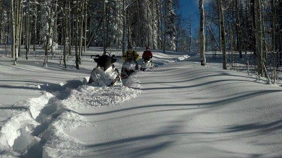 Elk Mountain Adventure Tours: powder day !