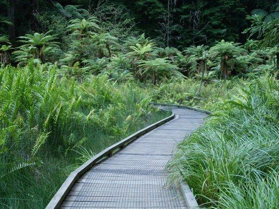 Redwoods, Whakarewarewa Forest: Walking Track over lake