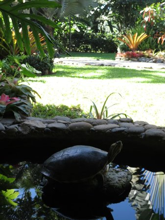 Hotel Banana Azul: Pond with turtles