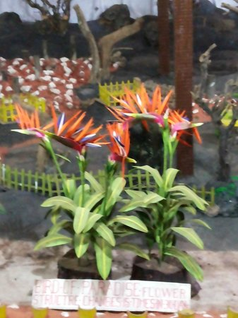 Thread Garden: The Bird of Paradise...