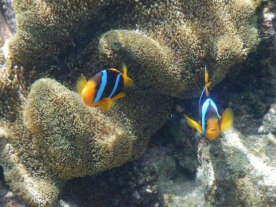 Navini Island Resort: Nimos on Main Reef