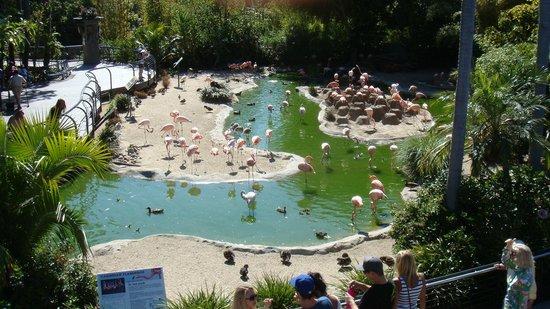 San Diego Zoo: flamencos