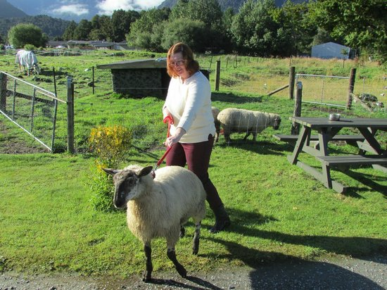 Ropatini's Homestay B & B : Taking owner's sheep for a walk
