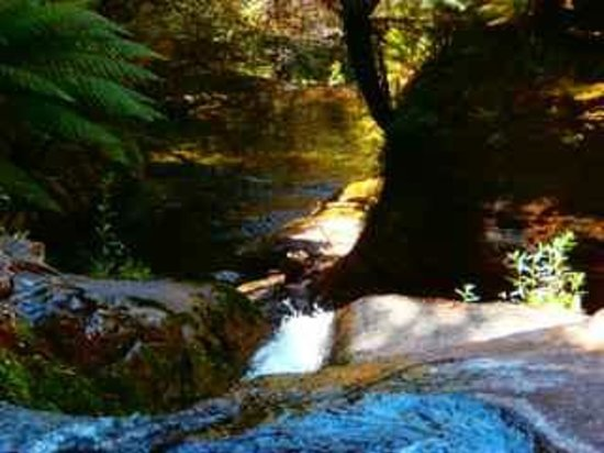 Liffey Falls: Lush tree ferns abound