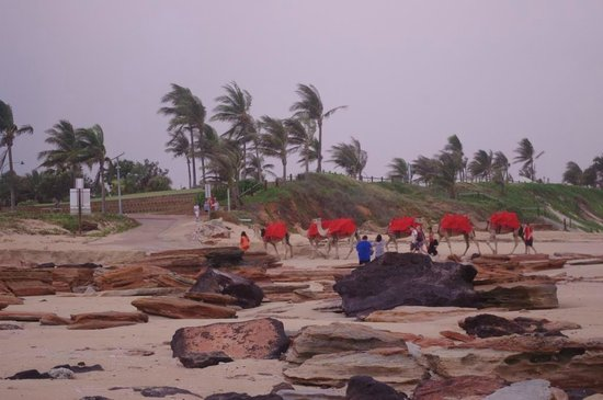 Cable Beach Club Resort & Spa: Camels on the beach opposite Resort