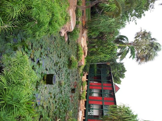 Cable Beach Club Resort & Spa: Lilly Pond