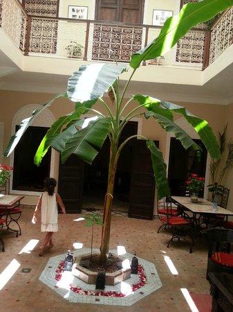 Marhbabikoum: patio, le bananier!
