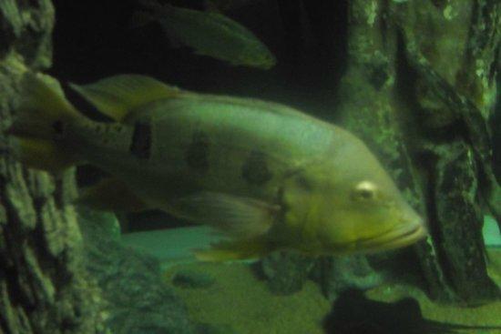 Chiang Mai Zoo Aquarium : Fisg