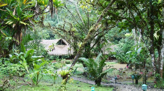 Esquinas Rainforest Lodge : Location