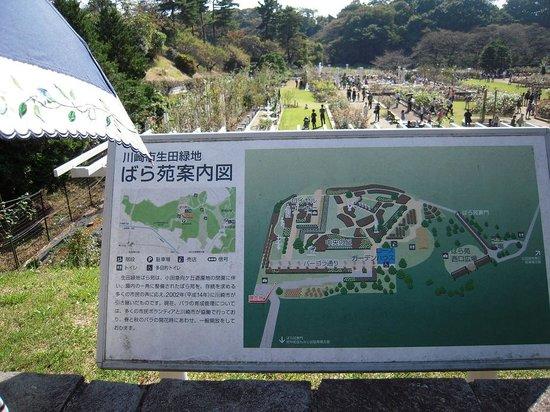 """薔薇園 - Picture of Ikuta Ryokuchi Park, KawasakiPhoto: """"薔薇園"""""""