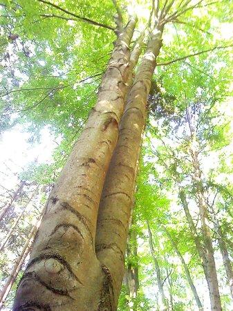 Naturel Hoteldorf Seeleitn: Лесной исполин