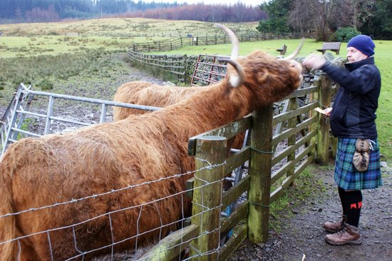 The Hairy Coo - Free Scottish Highlands Tour : Hairy Coo Tour