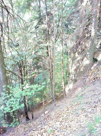 Naturel Hoteldorf Seeleitn: Сказочный лес
