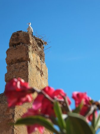 Maison Arabo Andalouse: Stork from the roof terrace
