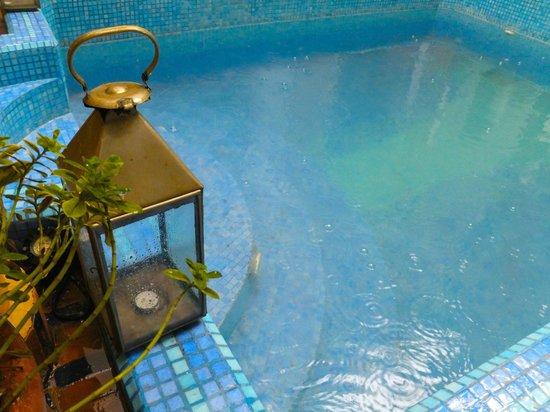 Maison Arabo Andalouse: Plunge pool
