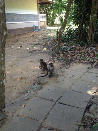 Mu Koh Lanta National Park: Monkeys