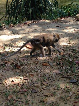 Mu Koh Lanta National Park: Monkey