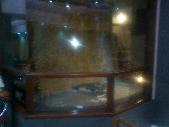 Tritone Hotel: A foto não está boa pela á água que  escorre pela estátua de Netuno que toma o subsolo térreo