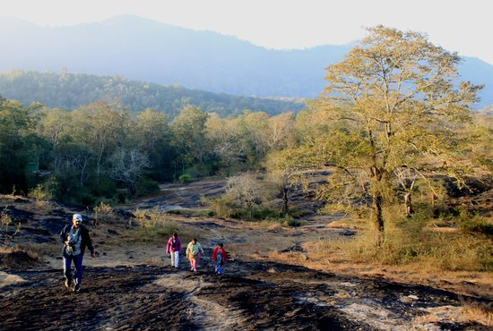 Parambikulam Wildlife Sanctuary: Good Morning PTR