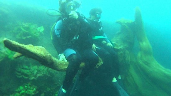 Media Luna School of Diving: Árbol petrificado media luna slp