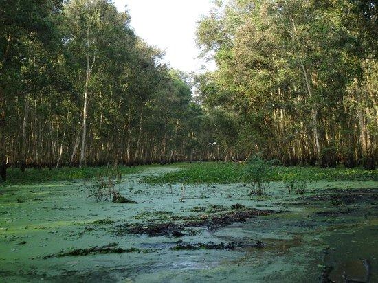 Tra Su Bird Sanctuary: ballade dans les canaux