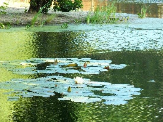 Vidago Palace Hotel: pond