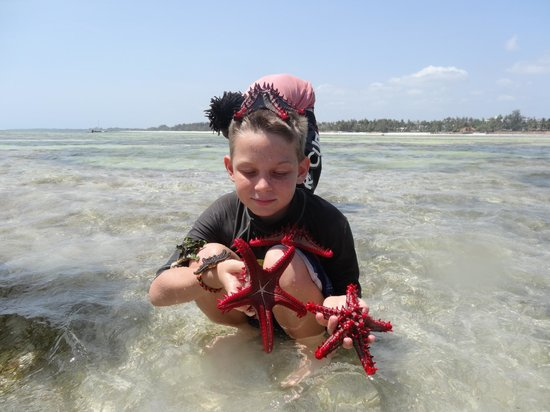 Lantana Galu Beach: Beach safari collecting starfish and sea urchins