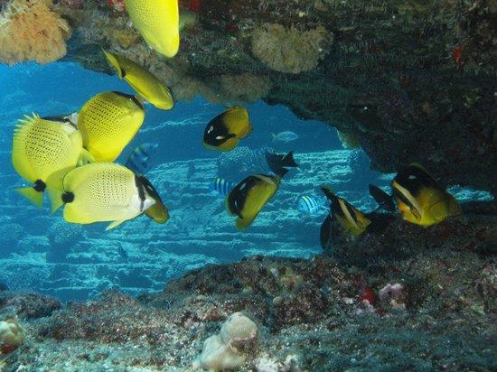 Seasport Divers: fish like confetti