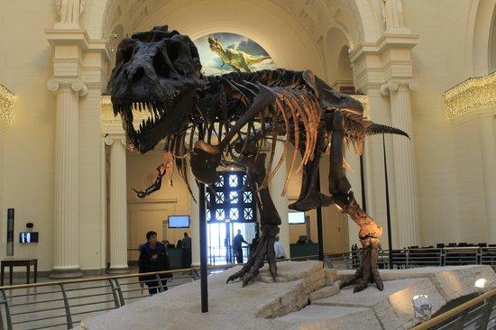 The Field Museum : Sue (esqueleto real)