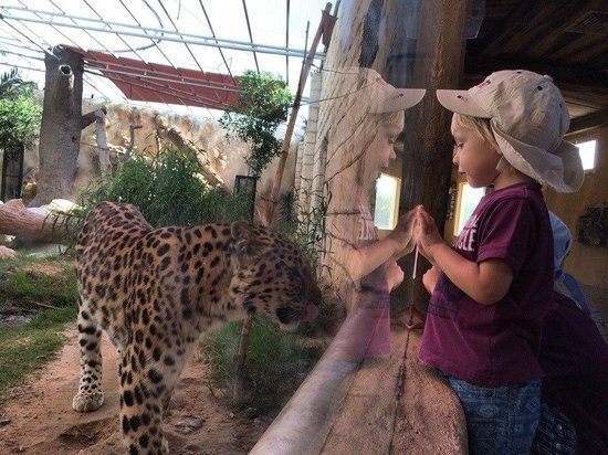 Emirates Park Zoo: Leopard and my younger son ;)