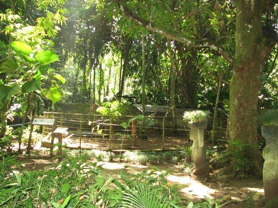 Tree of Life Wildlife Rescue Center and Botanical Gardens: beau parc bien aménagé