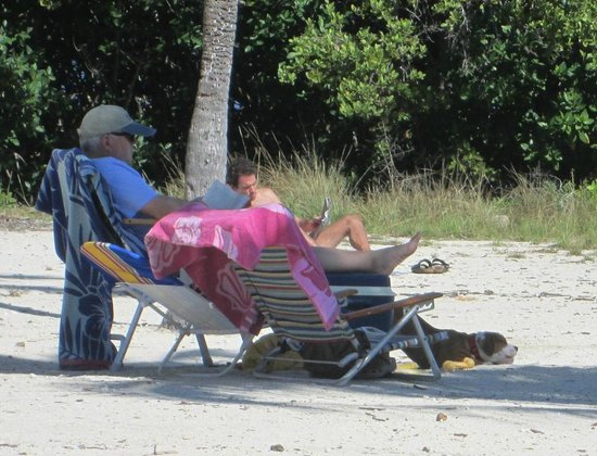John Pennekamp Coral Reef State Park : dog at pennecamp far beach