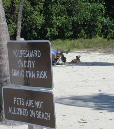 John Pennekamp Coral Reef State Park : pets not allowed on the beach, but theres a dog !
