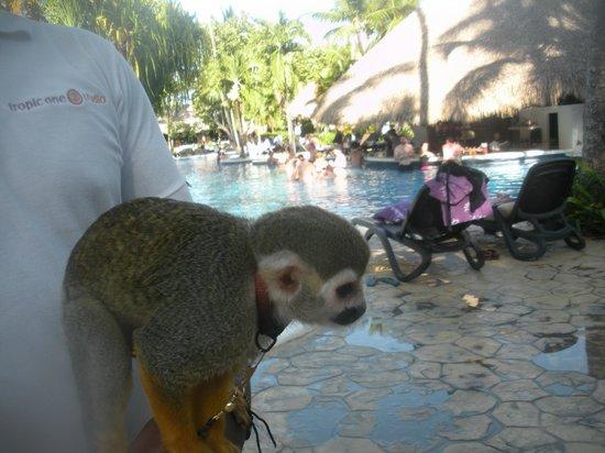 Paradisus Punta Cana Resort: Monkey at the pool