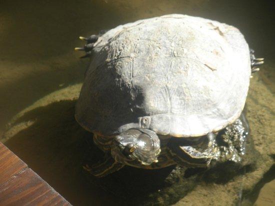 Paradisus Punta Cana: Turtle
