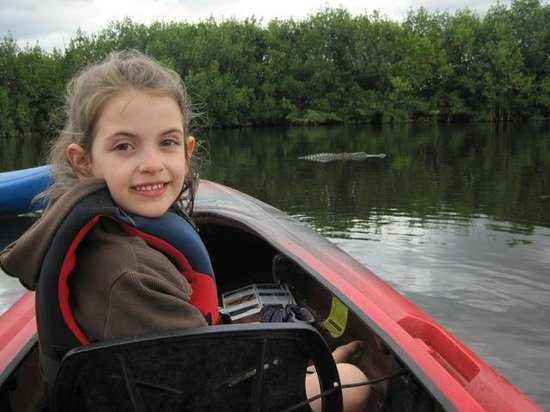 Tour The Glades - Private Wildlife Tours: alligator ahead!