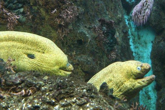 Shedd Aquarium: Morenas