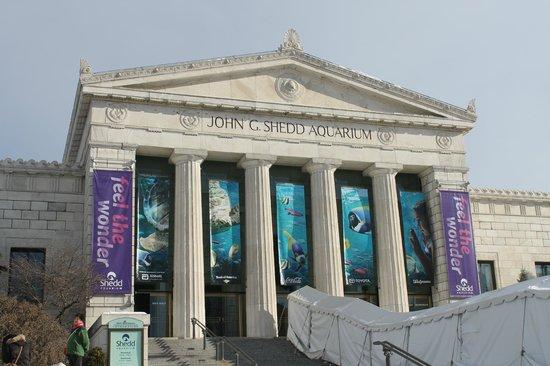 Shedd Aquarium: Entrada