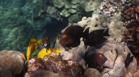 Espace Plongee: Captain Cook Dive