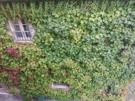 Hotel Borgo San Felice: Edera