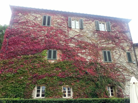 Hotel Borgo San Felice: Ari edera