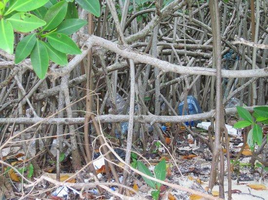 Sian Ka'an Biosphere Reserve: Sian Ka'an plastic #2