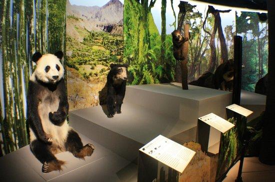 """Musée d'histoire Naturelle : Выставка """"Медведи"""""""