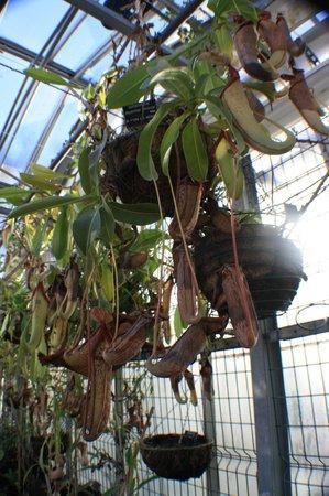 Musée d'histoire Naturelle : Плотоядные растения