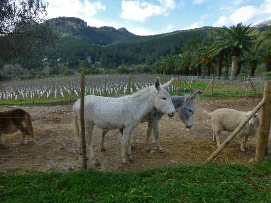 Gran Hotel Son Net : Mrs. & Mr. Donkey