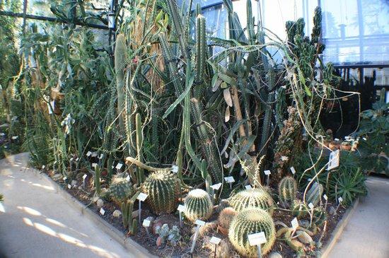 Musée d'histoire Naturelle : Теплицы ботанического сада